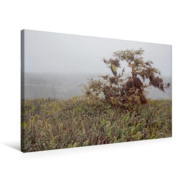 Premium Textil-Leinwand 75 cm x 50 cm quer, Isla Santa Cruz | Wandbild, Bild auf Keilrahmen, Fertigbild auf echter Leinwand, Leinwanddruck - Coverbild
