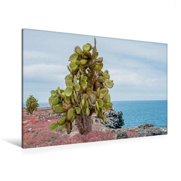 Premium Textil-Leinwand 120 cm x 80 cm quer, Steilküste - Isla South Placa | Wandbild, Bild auf Keilrahmen, Fertigbild auf echter Leinwand, Leinwanddruck - Coverbild