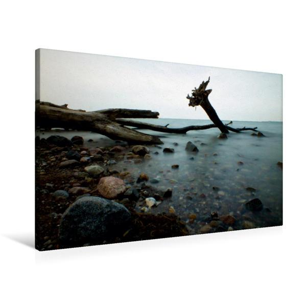 Premium Textil-Leinwand 90 cm x 60 cm quer, Baumstamm am Brodtener Ufer   Wandbild, Bild auf Keilrahmen, Fertigbild auf echter Leinwand, Leinwanddruck - Coverbild