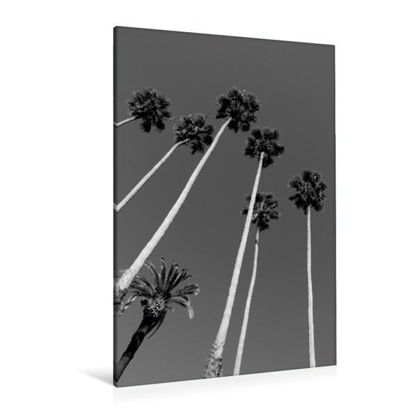 Premium Textil-Leinwand 80 cm x 120 cm  hoch, Palmen, Torrance, Kalifornien, USA | Wandbild, Bild auf Keilrahmen, Fertigbild auf echter Leinwand, Leinwanddruck - Coverbild