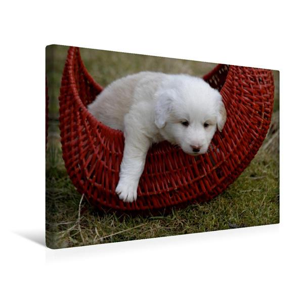 Premium Textil-Leinwand 45 cm x 30 cm quer, Border Collie Welpe | Wandbild, Bild auf Keilrahmen, Fertigbild auf echter Leinwand, Leinwanddruck - Coverbild