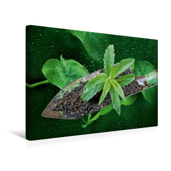 Premium Textil-Leinwand 45 cm x 30 cm quer, Ein Motiv aus dem Kalender Neues Leben   Wandbild, Bild auf Keilrahmen, Fertigbild auf echter Leinwand, Leinwanddruck - Coverbild