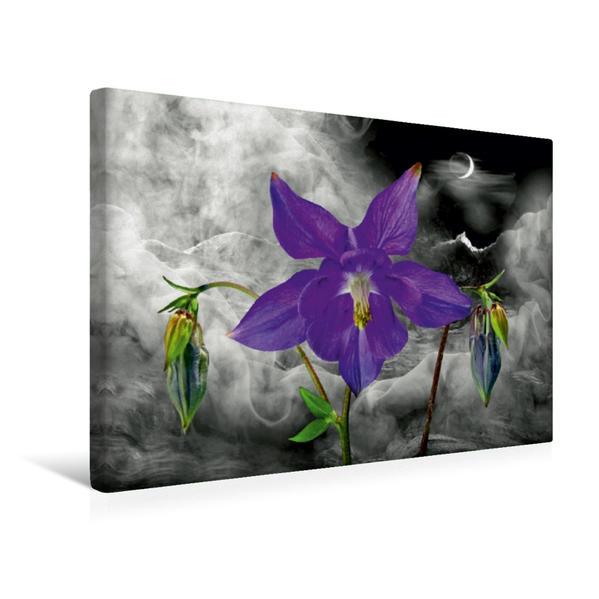 Premium Textil-Leinwand 45 cm x 30 cm quer, Ein Motiv aus dem Kalender Floral | Wandbild, Bild auf Keilrahmen, Fertigbild auf echter Leinwand, Leinwanddruck - Coverbild