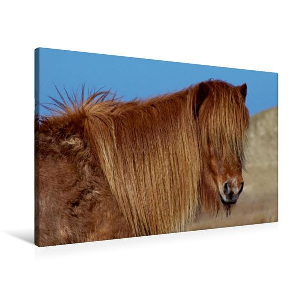 Premium Textil-Leinwand 90 cm x 60 cm quer, Islandpferd | Wandbild, Bild auf Keilrahmen, Fertigbild auf echter Leinwand, Leinwanddruck - Coverbild