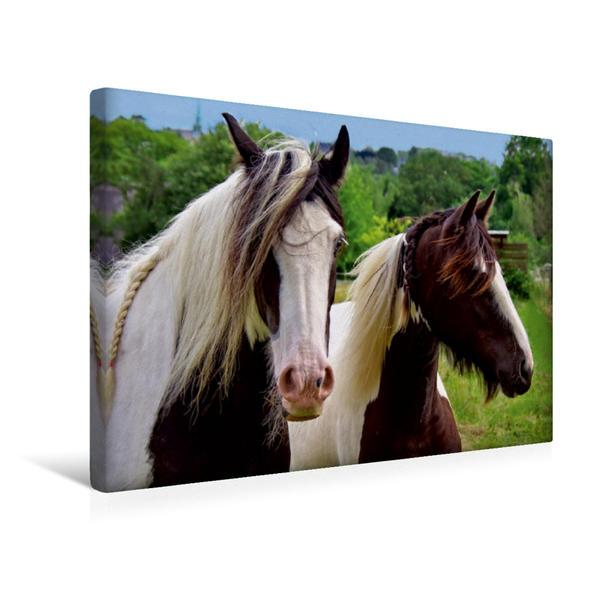 Premium Textil-Leinwand 45 cm x 30 cm quer, Zwei Pferde | Wandbild, Bild auf Keilrahmen, Fertigbild auf echter Leinwand, Leinwanddruck - Coverbild