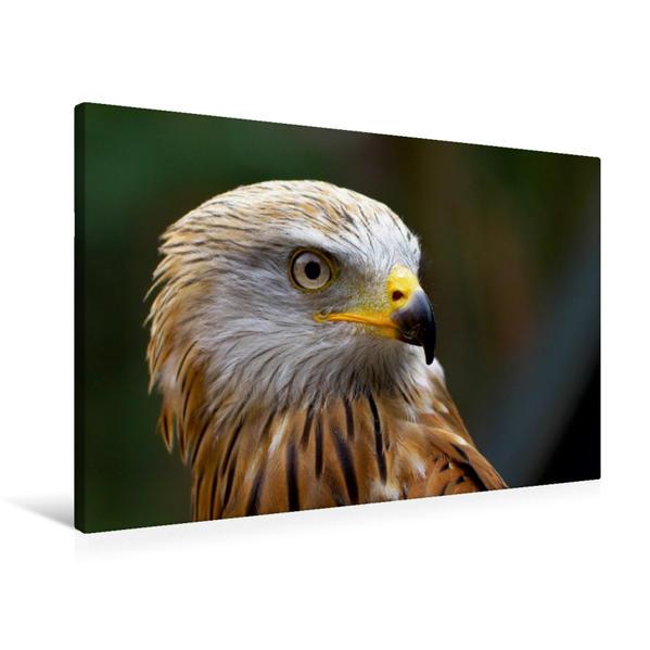 Premium Textil-Leinwand 90 cm x 60 cm quer, Rotmilan   Wandbild, Bild auf Keilrahmen, Fertigbild auf echter Leinwand, Leinwanddruck - Coverbild