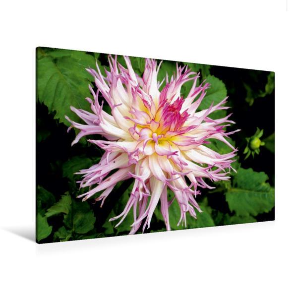 Premium Textil-Leinwand 120 cm x 80 cm quer, Dalienblüte   Wandbild, Bild auf Keilrahmen, Fertigbild auf echter Leinwand, Leinwanddruck - Coverbild