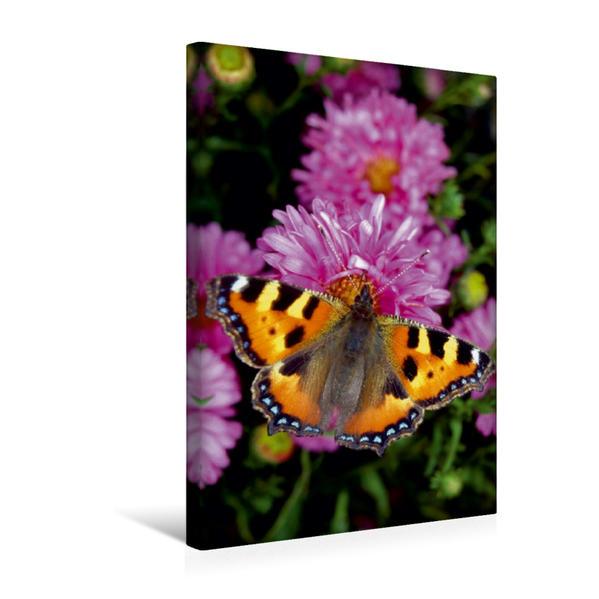 Premium Textil-Leinwand 30 cm x 45 cm hoch, Kleiner Fuchs auf Astern   Wandbild, Bild auf Keilrahmen, Fertigbild auf echter Leinwand, Leinwanddruck - Coverbild