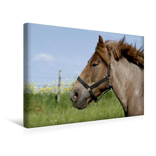 Premium Textil-Leinwand 45 cm x 30 cm quer, Kaltblutpferd | Wandbild, Bild auf Keilrahmen, Fertigbild auf echter Leinwand, Leinwanddruck - Coverbild