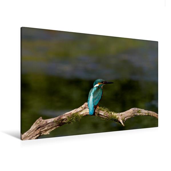 Premium Textil-Leinwand 120 cm x 80 cm quer, Europäischer Eisvogel | Wandbild, Bild auf Keilrahmen, Fertigbild auf echter Leinwand, Leinwanddruck - Coverbild
