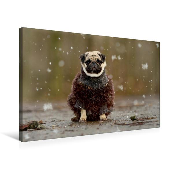 Premium Textil-Leinwand 75 cm x 50 cm quer, Kalt im Wald | Wandbild, Bild auf Keilrahmen, Fertigbild auf echter Leinwand, Leinwanddruck - Coverbild