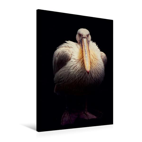Premium Textil-Leinwand 60 cm x 90 cm hoch, Pelikan Portrait | Wandbild, Bild auf Keilrahmen, Fertigbild auf echter Leinwand, Leinwanddruck - Coverbild