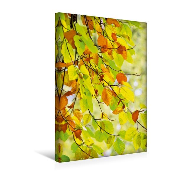 Premium Textil-Leinwand 30 cm x 45 cm hoch, Buchenblätter im Herbst | Wandbild, Bild auf Keilrahmen, Fertigbild auf echter Leinwand, Leinwanddruck - Coverbild