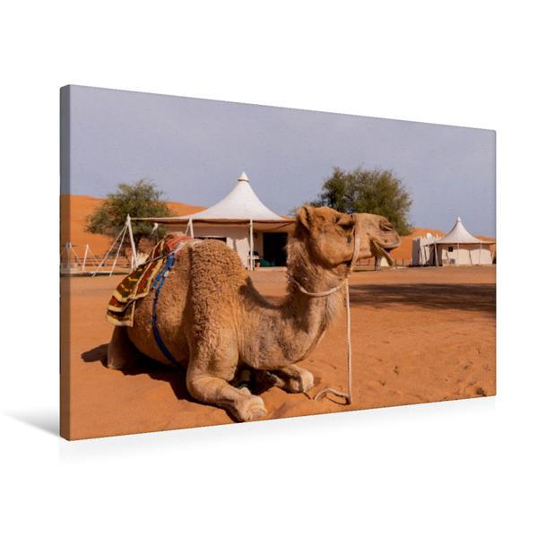 Premium Textil-Leinwand 75 cm x 50 cm quer, Dromedar Desert Night Camp Oman   Wandbild, Bild auf Keilrahmen, Fertigbild auf echter Leinwand, Leinwanddruck - Coverbild