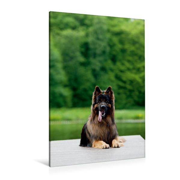 Premium Textil-Leinwand 80 cm x 120 cm  hoch, Deutscher Schäferhund Balou | Wandbild, Bild auf Keilrahmen, Fertigbild auf echter Leinwand, Leinwanddruck - Coverbild