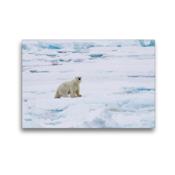 Premium Textil-Leinwand 45 cm x 30 cm quer, Eisbär   Wandbild, Bild auf Keilrahmen, Fertigbild auf echter Leinwand, Leinwanddruck - Coverbild