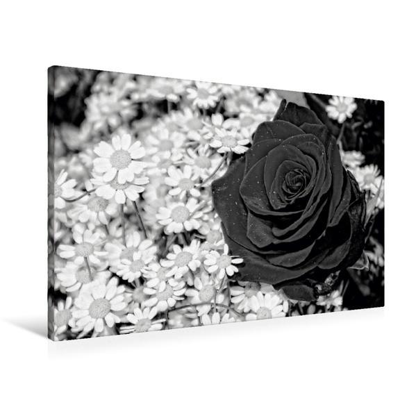 Premium Textil-Leinwand 90 cm x 60 cm quer, Mai Melancholie   Wandbild, Bild auf Keilrahmen, Fertigbild auf echter Leinwand, Leinwanddruck - Coverbild