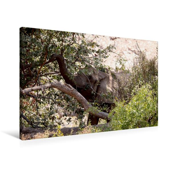 Premium Textil-Leinwand 90 cm x 60 cm quer, Futter vom Baum.  Jumbo - Auf den Spuren der Elefanten in Namibia | Wandbild, Bild auf Keilrahmen, Fertigbild auf echter Leinwand, Leinwanddruck - Coverbild
