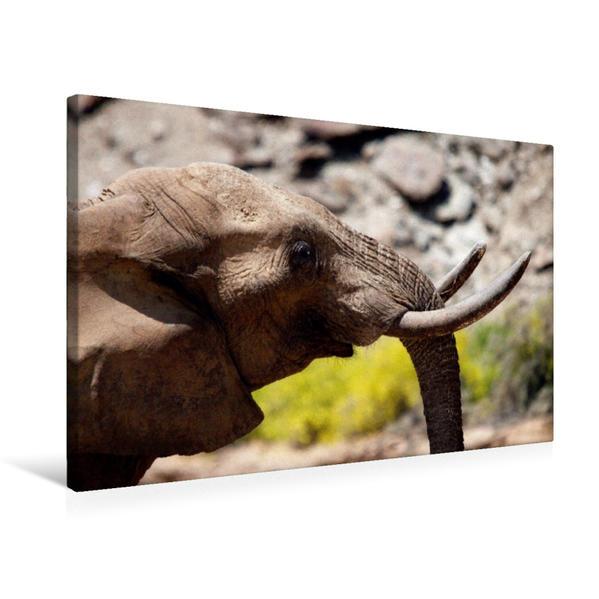 Premium Textil-Leinwand 75 cm x 50 cm quer, Elefantenportrait.  Jumbo - Auf den Spuren der Elefanten in Namibia | Wandbild, Bild auf Keilrahmen, Fertigbild auf echter Leinwand, Leinwanddruck - Coverbild