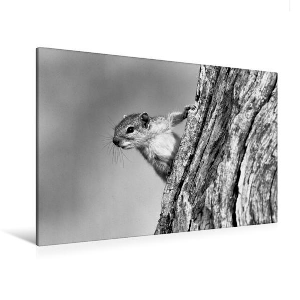 Premium Textil-Leinwand 120 cm x 80 cm quer, Baumhörnchen, Botswana | Wandbild, Bild auf Keilrahmen, Fertigbild auf echter Leinwand, Leinwanddruck - Coverbild