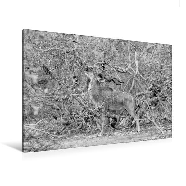 Premium Textil-Leinwand 120 cm x 80 cm quer, Männlicher Kudu, Botswana   Wandbild, Bild auf Keilrahmen, Fertigbild auf echter Leinwand, Leinwanddruck - Coverbild