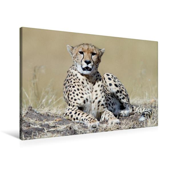 Premium Textil-Leinwand 90 cm x 60 cm quer, Gepard, Kenia | Wandbild, Bild auf Keilrahmen, Fertigbild auf echter Leinwand, Leinwanddruck - Coverbild