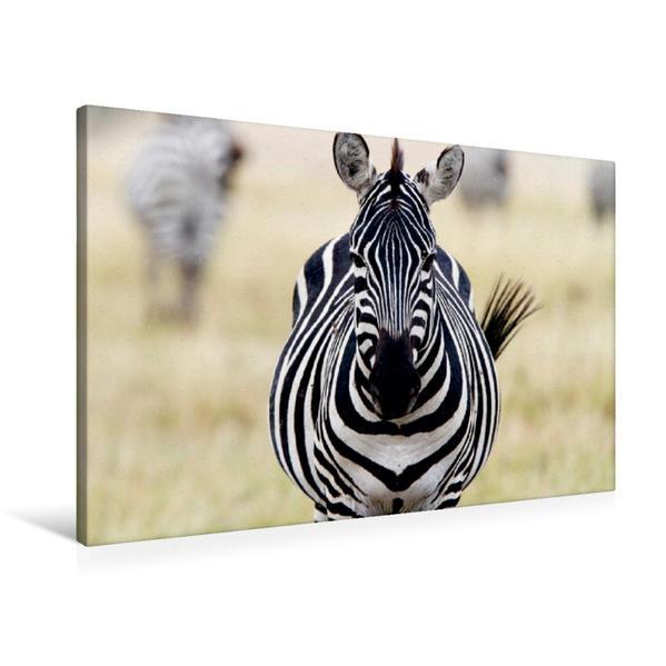 Premium Textil-Leinwand 90 cm x 60 cm quer, Masai Mara, Kenia | Wandbild, Bild auf Keilrahmen, Fertigbild auf echter Leinwand, Leinwanddruck - Coverbild