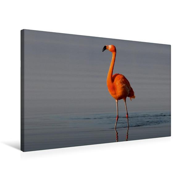 Premium Textil-Leinwand 75 cm x 50 cm quer, Flamingo in der Morgensonne | Wandbild, Bild auf Keilrahmen, Fertigbild auf echter Leinwand, Leinwanddruck - Coverbild