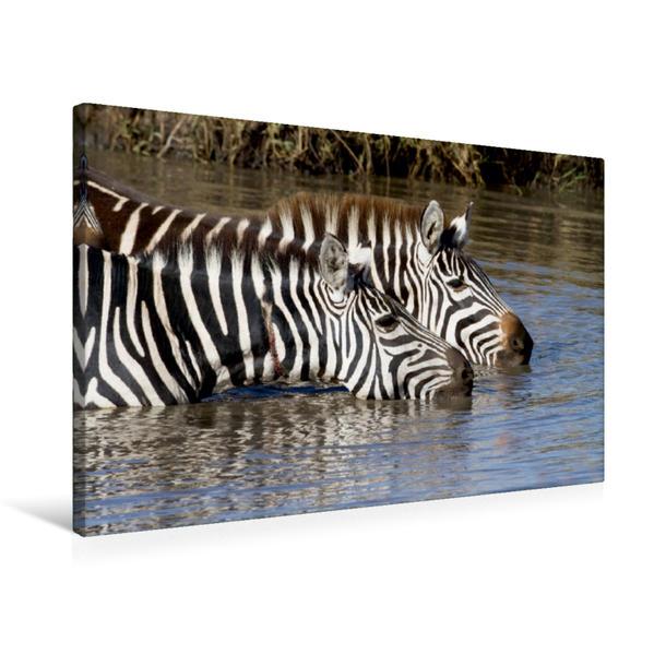 Premium Textil-Leinwand 75 cm x 50 cm quer, Masai Mara, Kenia | Wandbild, Bild auf Keilrahmen, Fertigbild auf echter Leinwand, Leinwanddruck - Coverbild