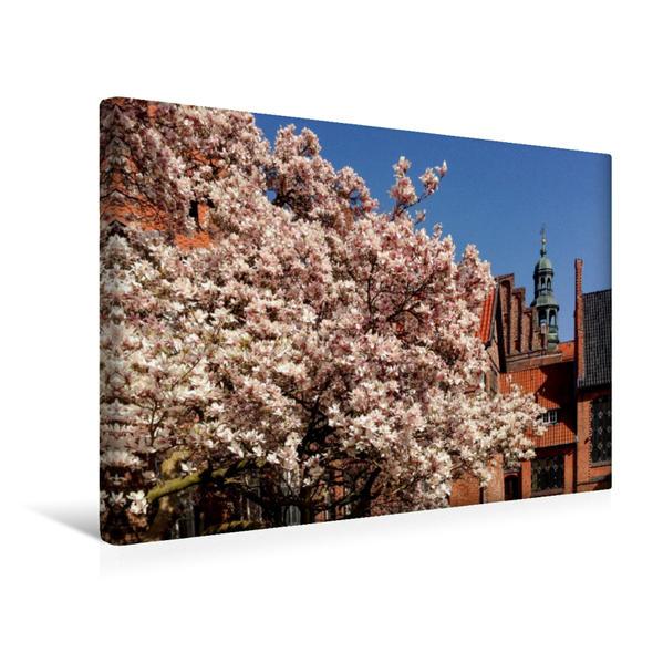 Premium Textil-Leinwand 45 cm x 30 cm quer, Magnolienblüte im Rathausgarten Lüneburg | Wandbild, Bild auf Keilrahmen, Fertigbild auf echter Leinwand, Leinwanddruck - Coverbild