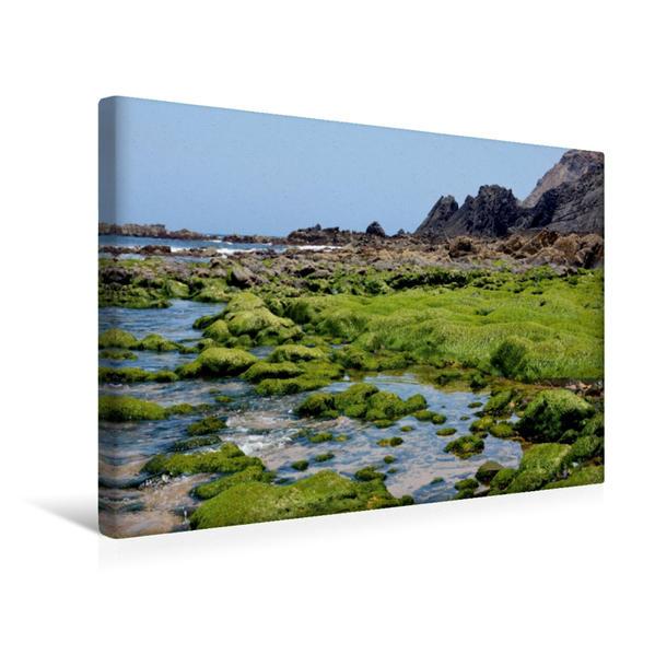 Premium Textil-Leinwand 45 cm x 30 cm quer, Meerwiese   Wandbild, Bild auf Keilrahmen, Fertigbild auf echter Leinwand, Leinwanddruck - Coverbild