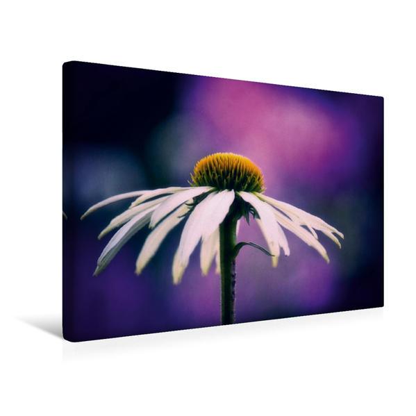 Premium Textil-Leinwand 45 cm x 30 cm quer, Echinacea Avalanche | Wandbild, Bild auf Keilrahmen, Fertigbild auf echter Leinwand, Leinwanddruck - Coverbild