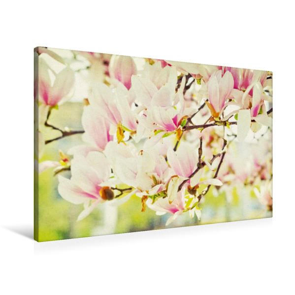 Premium Textil-Leinwand 90 cm x 60 cm quer, Magnolien | Wandbild, Bild auf Keilrahmen, Fertigbild auf echter Leinwand, Leinwanddruck - Coverbild