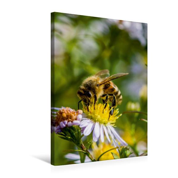 Premium Textil-Leinwand 50 cm x 75 cm hoch, Biene auf Marguerite | Wandbild, Bild auf Keilrahmen, Fertigbild auf echter Leinwand, Leinwanddruck - Coverbild