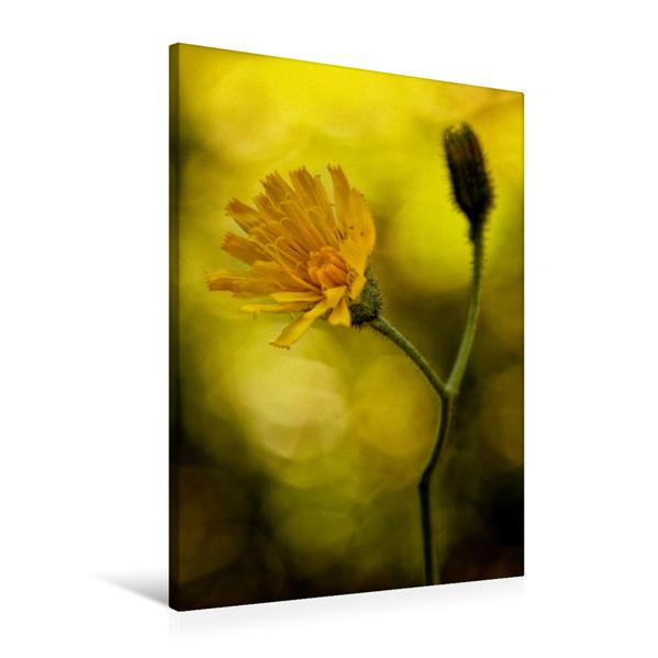 Premium Textil-Leinwand 60 cm x 90 cm hoch, Ein Motiv aus dem Kalender Alpenblumen 2017 | Wandbild, Bild auf Keilrahmen, Fertigbild auf echter Leinwand, Leinwanddruck - Coverbild