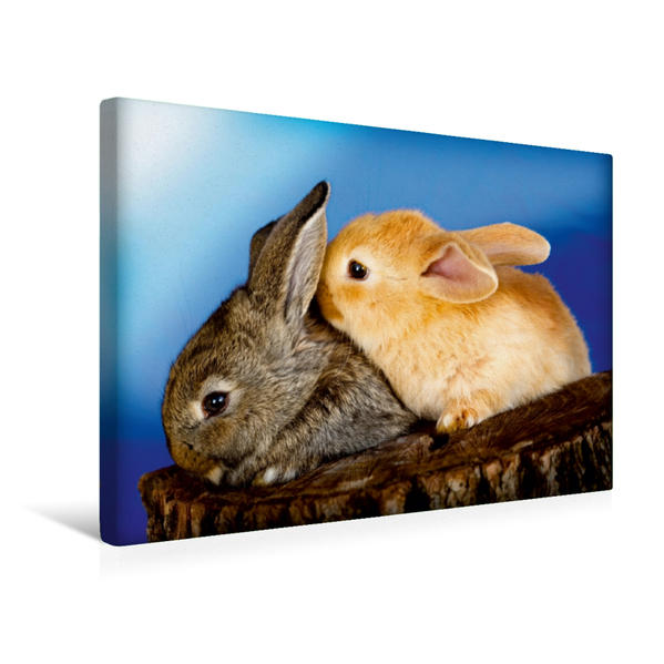 Premium Textil-Leinwand 45 cm x 30 cm quer, Lustige Kaninchen | Wandbild, Bild auf Keilrahmen, Fertigbild auf echter Leinwand, Leinwanddruck - Coverbild