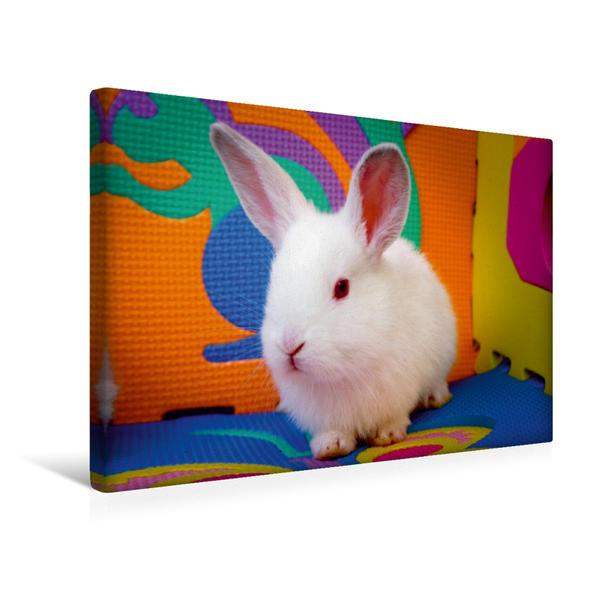 Premium Textil-Leinwand 45 cm x 30 cm quer, Lustiges Kaninchen | Wandbild, Bild auf Keilrahmen, Fertigbild auf echter Leinwand, Leinwanddruck - Coverbild