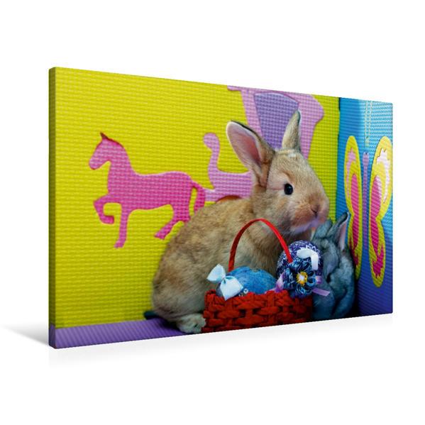 Premium Textil-Leinwand 90 cm x 60 cm quer, Lustige Kaninchen   Wandbild, Bild auf Keilrahmen, Fertigbild auf echter Leinwand, Leinwanddruck - Coverbild