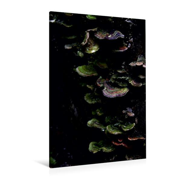 Premium Textil-Leinwand 80 cm x 120 cm  hoch, Ein Motiv aus dem Kalender Magische Waldmomente   Wandbild, Bild auf Keilrahmen, Fertigbild auf echter Leinwand, Leinwanddruck - Coverbild
