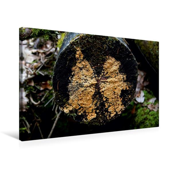 Premium Textil-Leinwand 75 cm x 50 cm quer, Wie ein Schmetterling... | Wandbild, Bild auf Keilrahmen, Fertigbild auf echter Leinwand, Leinwanddruck - Coverbild