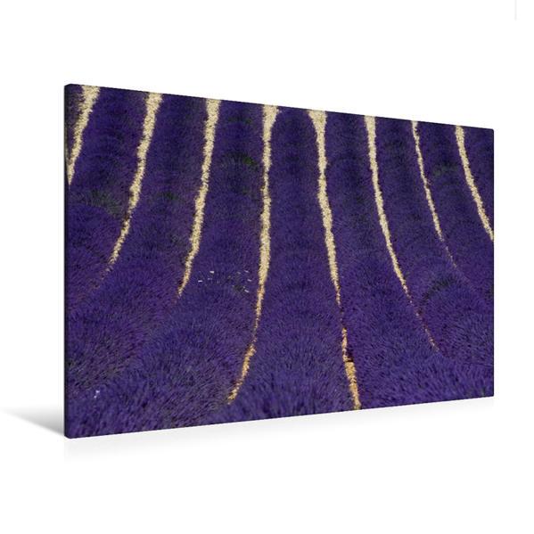 Premium Textil-Leinwand 120 cm x 80 cm quer, Lavendelfeld | Wandbild, Bild auf Keilrahmen, Fertigbild auf echter Leinwand, Leinwanddruck - Coverbild