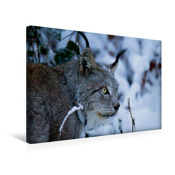 Premium Textil-Leinwand 45 cm x 30 cm quer, Winterportrait   Wandbild, Bild auf Keilrahmen, Fertigbild auf echter Leinwand, Leinwanddruck - Coverbild
