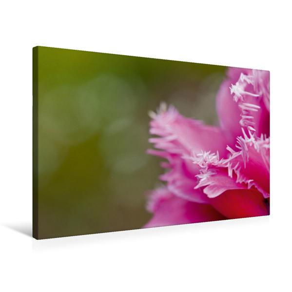 Premium Textil-Leinwand 75 cm x 50 cm quer, Frühlingsgruß | Wandbild, Bild auf Keilrahmen, Fertigbild auf echter Leinwand, Leinwanddruck - Coverbild