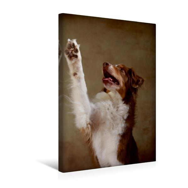 Premium Textil-Leinwand 30 cm x 45 cm hoch, Jake, 7 Jahre | Wandbild, Bild auf Keilrahmen, Fertigbild auf echter Leinwand, Leinwanddruck - Coverbild