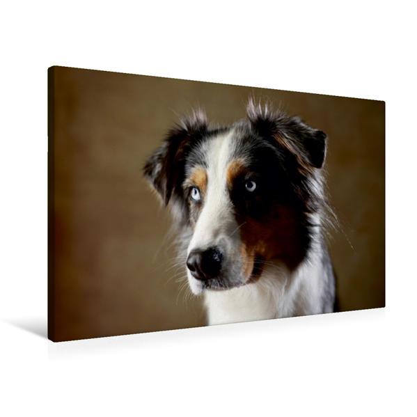 Premium Textil-Leinwand 90 cm x 60 cm quer, Dakota, 9 Jahre | Wandbild, Bild auf Keilrahmen, Fertigbild auf echter Leinwand, Leinwanddruck - Coverbild