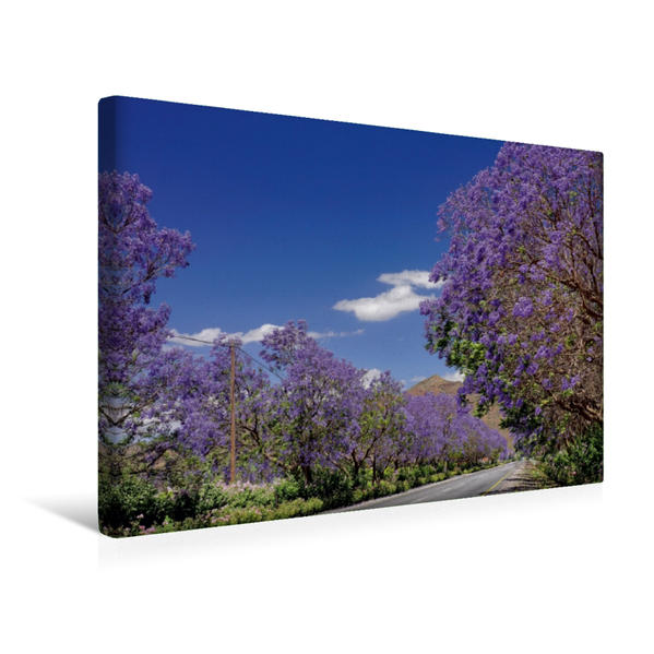 Premium Textil-Leinwand 45 cm x 30 cm quer, Blühende Jacaranda-Alleen - Bonnievale, Süd-Afrika | Wandbild, Bild auf Keilrahmen, Fertigbild auf echter Leinwand, Leinwanddruck - Coverbild