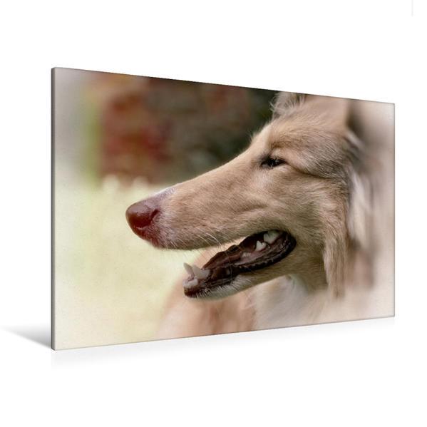 Premium Textil-Leinwand 120 cm x 80 cm quer, Ein Motiv aus dem Kalender Leidenschaft Hund | Wandbild, Bild auf Keilrahmen, Fertigbild auf echter Leinwand, Leinwanddruck - Coverbild