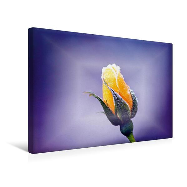Premium Textil-Leinwand 45 cm x 30 cm quer, Für Dich | Wandbild, Bild auf Keilrahmen, Fertigbild auf echter Leinwand, Leinwanddruck - Coverbild