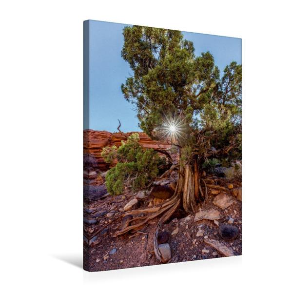 Premium Textil-Leinwand 50 cm x 75 cm hoch, Utah Juniper | Wandbild, Bild auf Keilrahmen, Fertigbild auf echter Leinwand, Leinwanddruck - Coverbild