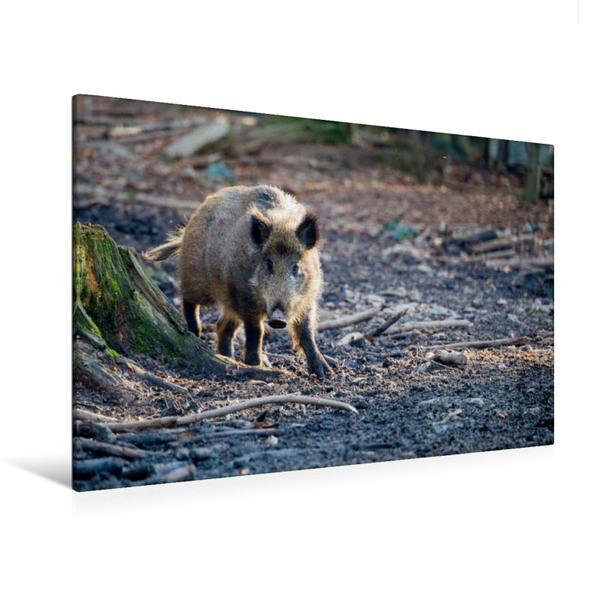 Premium Textil-Leinwand 120 cm x 80 cm quer, Wildschwein | Wandbild, Bild auf Keilrahmen, Fertigbild auf echter Leinwand, Leinwanddruck - Coverbild